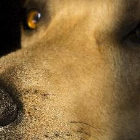 Dogs also recognize us in photographs