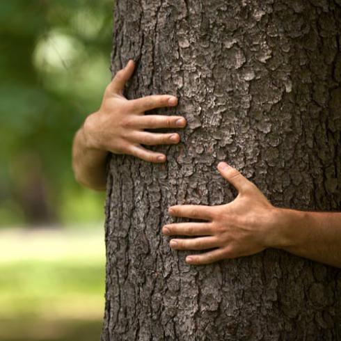 MULTIPURPOSE TREES AND NON-WOOD PRODUCTS A CHALLENGE AND OPPORTUNITY