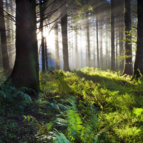 FUTURE-ORIENTED INTEGRATED MANAGEMENT OF EUROPEAN FOREST LANDSCAPES