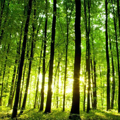 ADVANCING MEDITERRANEAN FOREST RESEARCH CAPACITIES