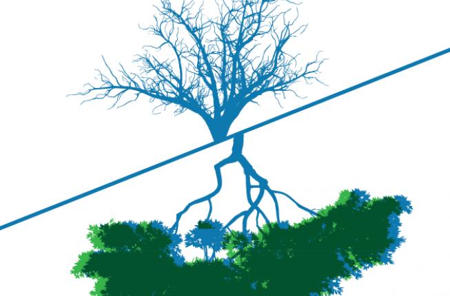 Collegamento a Per 14 milioni di alberi.L'emergenza forestale dopo il ciclone Vaia