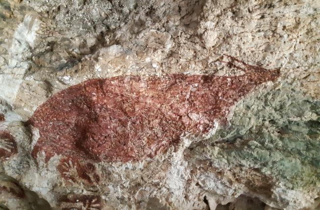 Collegamento a Sulawesi, i dipinti rupestri più antichi del mondo
