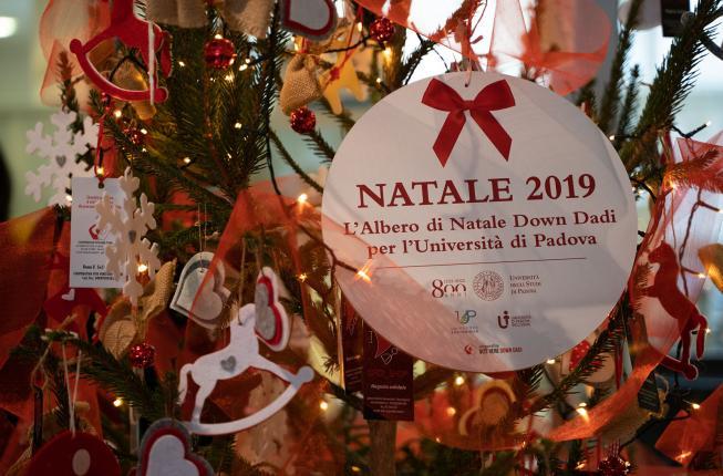 Collegamento a A Palazzo Storione un albero di Natale all'insegna dell'impegno per la sostenibilità e l'inclusione