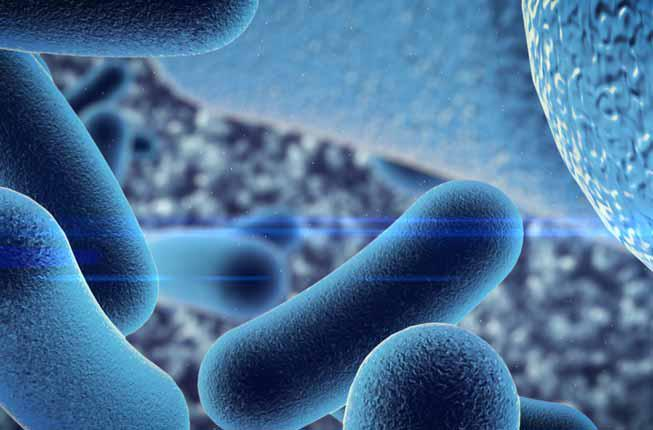 Collegamento a Protein Toxins: a Journey between Physiology and Medicine