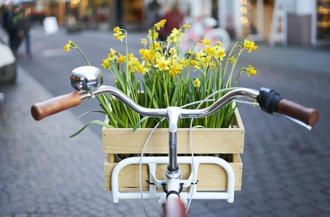 Collegamento a Al via la marcatura di biciclette e monopattini in Ateneo
