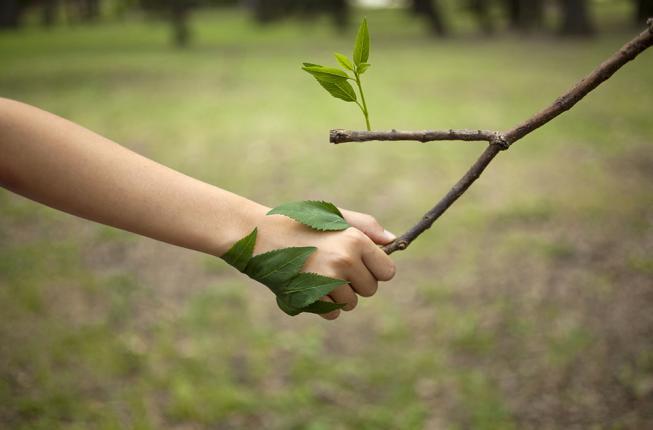 Collegamento a Carbon footprint: l'impronta Unipd si fa sempre più leggera