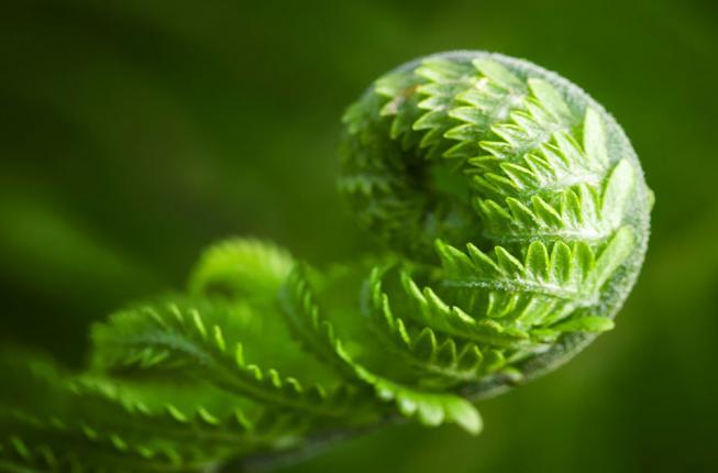 Collegamento a L'Index Seminum 2020 dell'Orto botanico e la ricchezza della diversità biologica