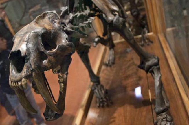 Collegamento a Luoghi di scienza e cultura: il Museo di Geologia e paleontologia e Palazzo cavalli