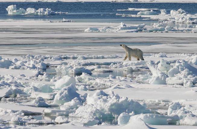 Collegamento a L'Artico, nuova terra di conquista
