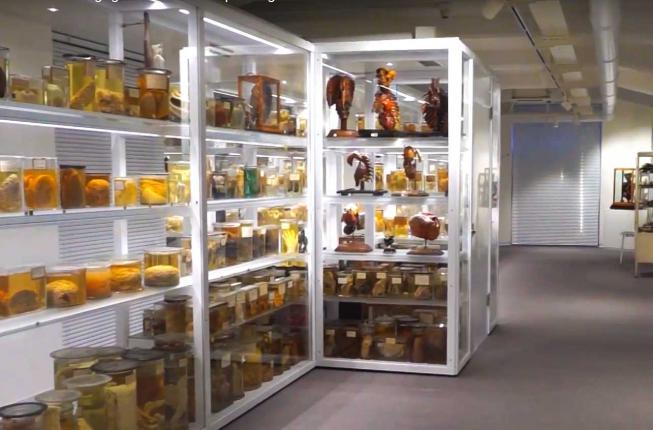 Collegamento a QR code e realtà aumentata per il museo di Anatomia patologica