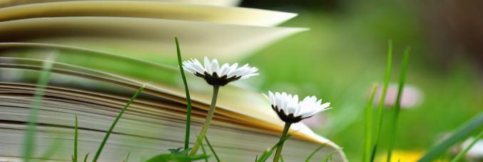 libro erba