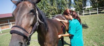 cavallo agripolis
